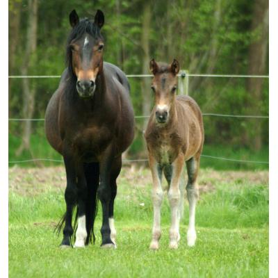 Paardenmelk foto 1